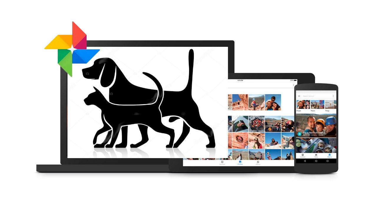 Google fotos reconoce animales y mascotas